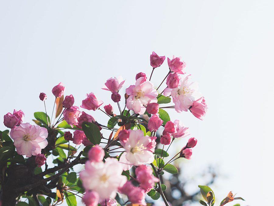 5 ayudas para tu cuerpo & mente en primavera