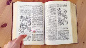 libro Dioscórides de Pío Font Quer edición 1962