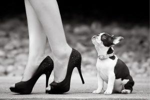 perro mirando a una mujer con zapatos de tacón