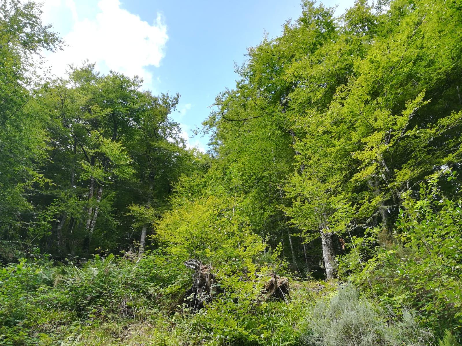 terapia de bosque