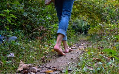 ¿Conoces las maravillas de la Terapia de Bosque?